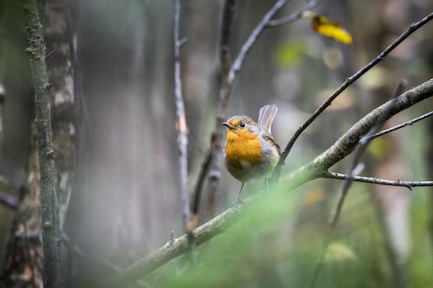 Kolorowy ptak siedzący na gałęzi drzewa