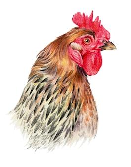Kolorowy rysunek ołówkami akwarelowymi. głowa kurczaka w profilu na białym tle.
