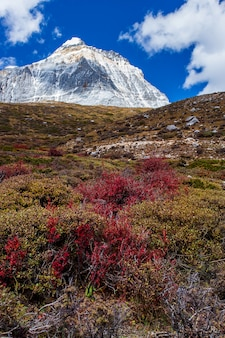 Kolorowy w jesiennym lesie i śnieżnej górze w rezerwacie przyrody yading,