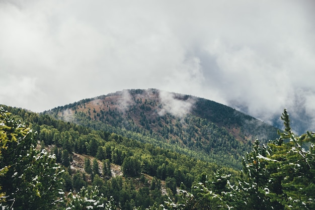 Kolorowy widok z zielonych gałęzi drzew iglastych ze śniegiem na dużą leśną górę w jesiennych kolorach w szarych niskich chmurach. malowniczy jesienny krajobraz z dużą górą z lasem iglastym w chmurach deszczowych.