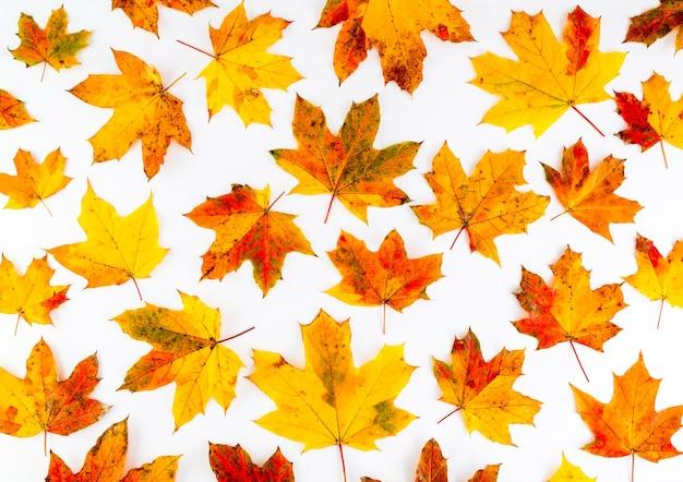 Kolorowy wzór jesiennych liści na białym tle