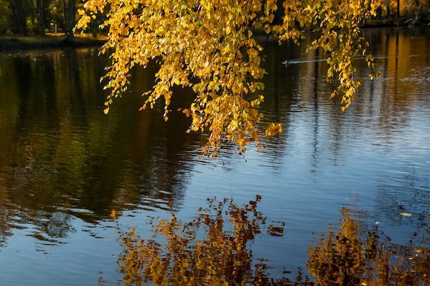 Kolory jesieni w parku nad jeziorem. kolorowe liście na drzewach, rano w rzece po deszczowej nocy.
