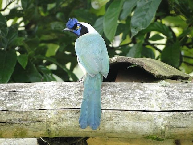 Kolumbijska ptaki