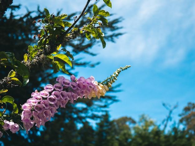 Kolumna różowych kwiatów na roślinie na tle zielonego i błękitnego nieba