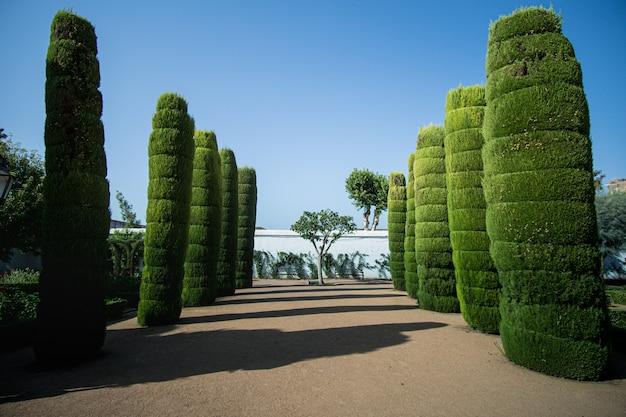 Kolumnada drzew w kordobie, hiszpania w słoneczny dzień