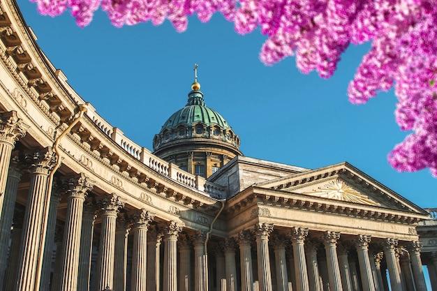 Kolumny katedry kazańskiej na tle błękitnego nieba na pierwszym planie jaskrawo kwitnące kwiaty bzu