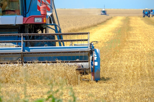 Kombajn rolniczy kosi pszenicę