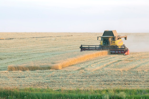 Kombajn zbiera pszenicę na polu. przygotowanie ziarna. agronomia i rolnictwo.