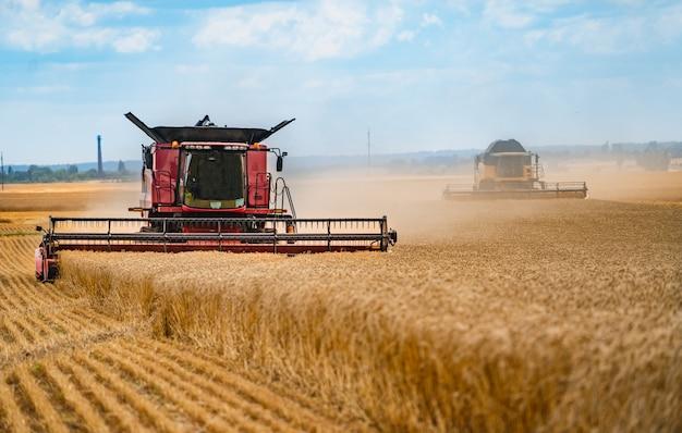 Kombajn zbożowy pracujący na polu pszenicy. sektor rolny