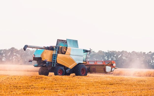 Kombajn zbożowy pracujący podczas zbioru na polach uprawnych, maszynowe cięcie upraw, koncepcja rolnictwa