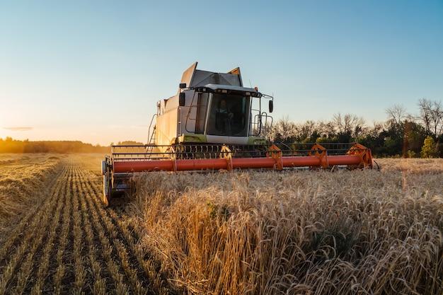 Kombajn zbożowy zbiera dojrzałą pszenicę dojrzałe kłosy złotego pola na zachodzie słońca pochmurne pomarańczowe niebo