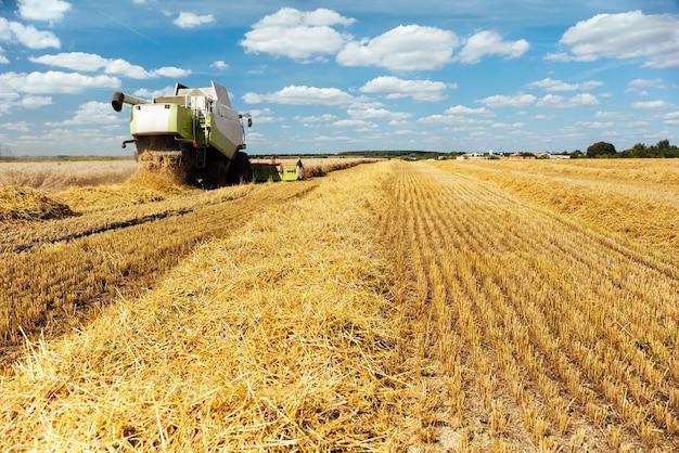 Kombajn zbożowy zbiera dojrzałą pszenicę. dojrzałe uszy złote pole na tle zachmurzonego nieba pomarańczowy zachód słońca. . koncepcja bogatych zbiorów. obraz rolnictwa