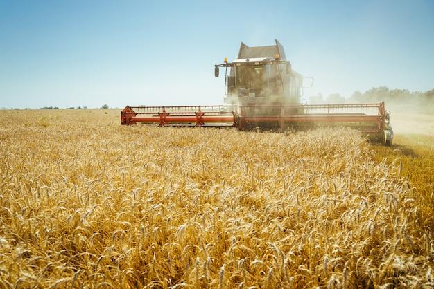 Kombajn zbożowy zbiera dojrzałą pszenicę. koncepcja bogatych zbiorów. obraz rolnictwa