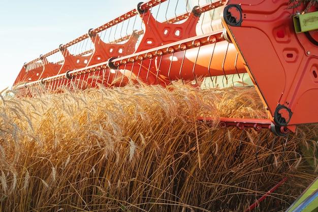 Kombajn zbożowy zbiera dojrzałą pszenicę. koncepcja bogatych zbiorów.