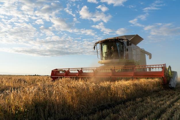 Kombajn zbożowy zbiera dojrzałą pszenicę. obraz rolnictwa