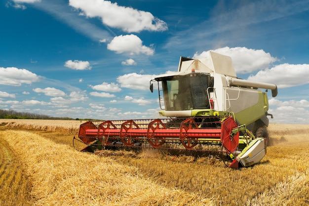 Kombajn zbożowy zbiera dojrzałą pszenicę. . obraz rolnictwa