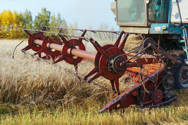 Kombajn zbożowy zbiera dojrzałą pszenicę.