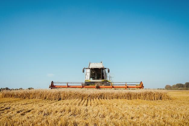 Kombajn zbożowy zbiera dojrzały obraz rolnictwa pszenicy agriculture