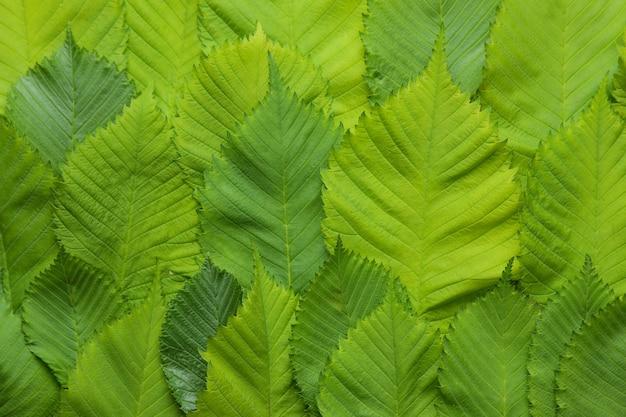 Kompozycja abstrakcyjna lato. piękne zielone liście na jasnym tle betonu. liść tło. widok z góry