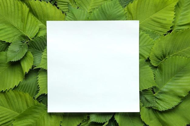 Kompozycja abstrakcyjna lato. puste dla tekstu i pięknych zielonych liści. widok z góry.