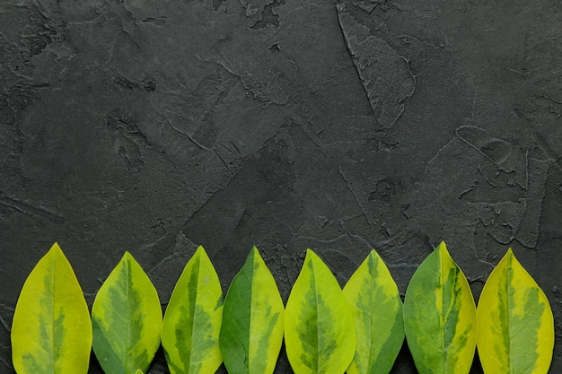 Kompozycja abstrakcyjna lato. ramka tekstu z pięknych zielonych liści na betonowym czarnym tle. widok z góry. wolne miejsce