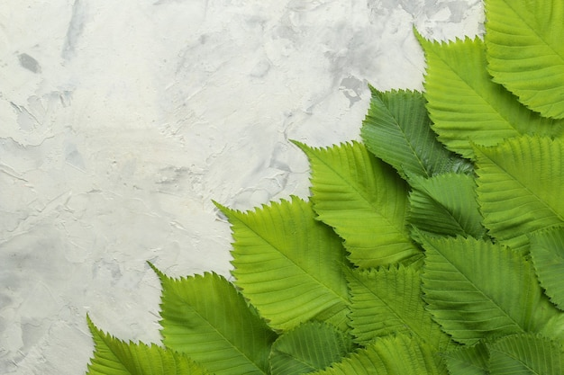 Kompozycja abstrakcyjna lato. ramka tekstu z pięknych zielonych liści na jasnym tle betonu. widok z góry. wolne miejsce
