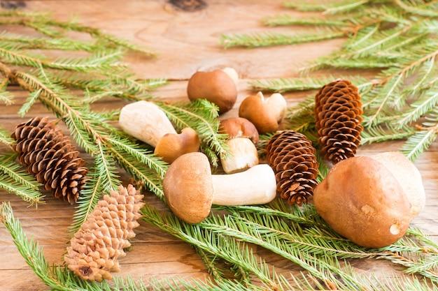 Kompozycja białych grzybów leśnych na drewnianym tle wsi ze świerkowymi gałązkami i szyszkami..