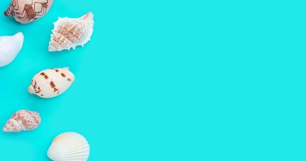 Kompozycja egzotycznych muszelek na niebieskim tle.
