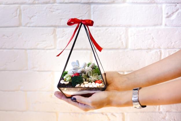 Kompozycja florarium sukulentów, kamienia, piasku i szkła, element wnętrza, wystrój domu, święta,