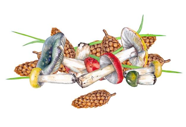 Kompozycja grzybów russula i szyszek jodły. akwarela ilustracja