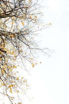 Kompozycja jesienno-jesienna. drzewa z suszonymi gałęziami i żółtymi liśćmi. koncepcja upadku. naturalny.