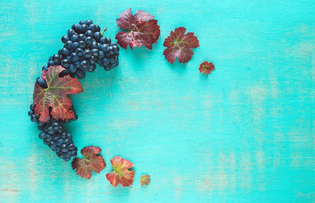 Kompozycja klastrów dojrzałych czarnych winogron i liści winorośli na pomalowanym niebieskim tle.