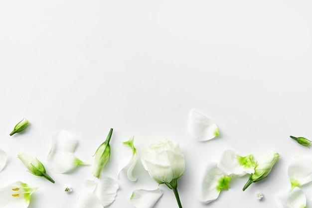 Kompozycja kwiatów, delikatne płatki widok z góry