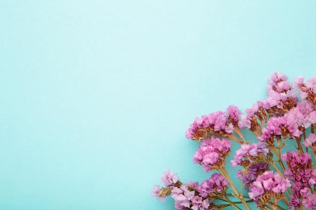 Kompozycja kwiatów. kwiaty łyszczec na pastelowym niebieskim tle. leżał na płasko, widok z góry, miejsce na kopię. wiosna