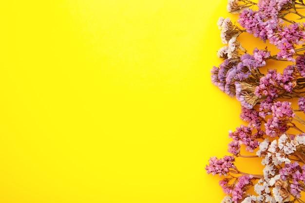 Kompozycja kwiatów. kwiaty łyszczec na pastelowym żółtym tle. leżał na płasko, widok z góry, miejsce na kopię. wiosna