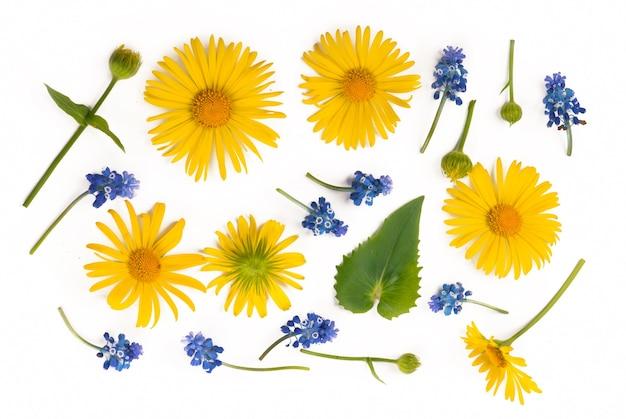 Kompozycja kwiatów. okrągła rama wykonana z żółtych i niebieskich kwiatów, gałęzi eukaliptusa na białym tle.