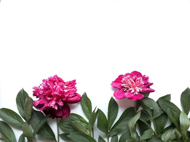Kompozycja kwiatów. rama wykonana z zielonych liści i różowe piwonie na białym tle. dzień ślubu, dzień matki i koncepcja dzień kobiet. płaski świeckich, widok z góry.
