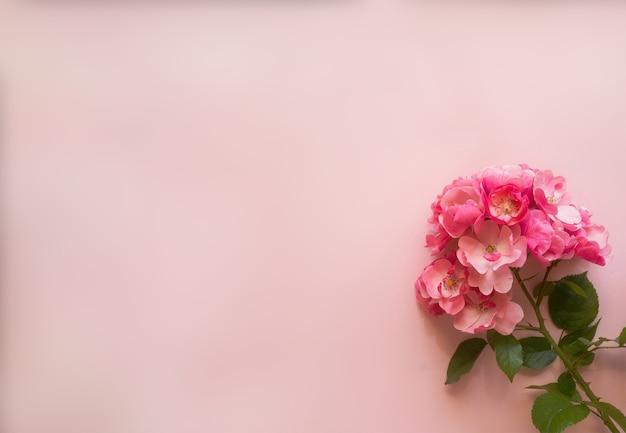 Kompozycja kwiatów. różowa róża oddział na miękkim różowym tle. koncepcja wiosna, lato. płaski świeckich, widok z góry, kopia przestrzeń.