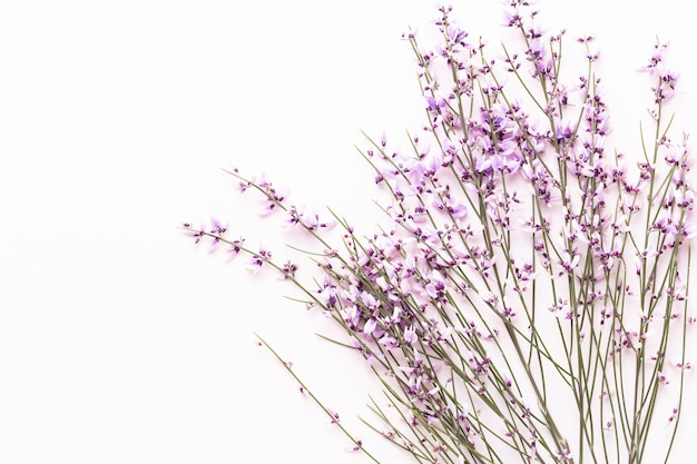 Kompozycja kwiatów. różowe kwiaty, koncepcja wiosny.