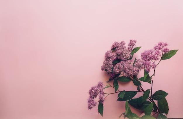 Kompozycja kwiatów różowe kwiaty na miękkim różowym tle wiosna lato koncepcja płaski leżał widok z góry