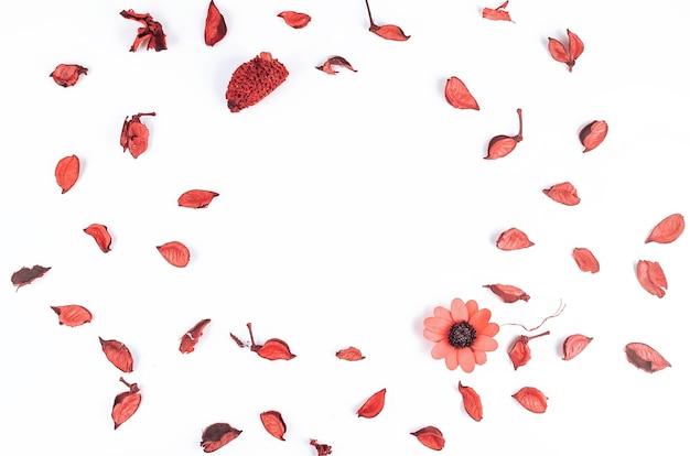 Kompozycja kwiatów. suszone liście, kwiaty, płatki, pąki na białym tle,