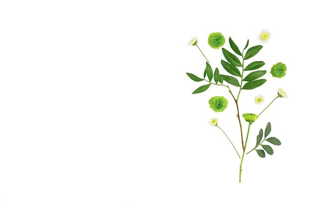 Kompozycja kwiatów. wzór wykonany z chryzantem, na białym tle leżał płaski, widok z góry, kwadrat.