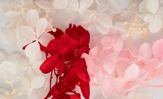 Kompozycja kwiatów. wzór wykonany z kwiatów hortensji różne kolory na białym tle. piękna wiosna, lato tło. płaski, format banerowy.