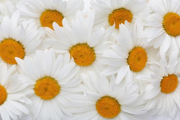 Kompozycja kwiatów z widokiem z góry