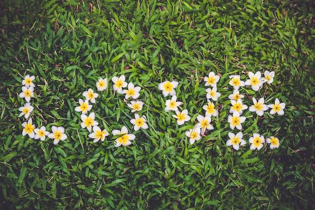 Kompozycja kwiatowa frangipani jako słowo miłość na zielonej trawie