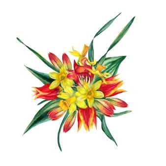 Kompozycja kwiatowa realistycznych kwitnących świeżych wiosennych kwiatów. żółte narcissuses i czerwone tulipany. akwarela ilustracja