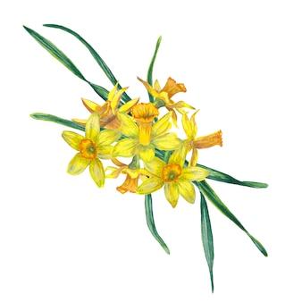 Kompozycja kwiatowa realistycznych kwitnących świeżych wiosennych kwiatów. żółte narcissuses w widoku z góry. akwarela ilustracja