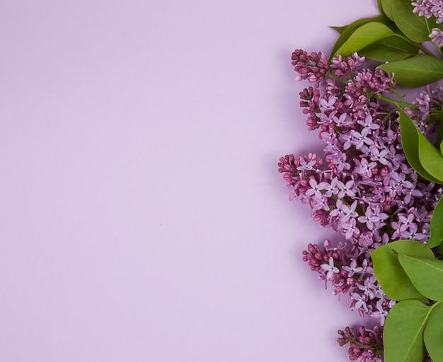 Kompozycja kwiatowa wiązka bzu płaski układanie widok z góry
