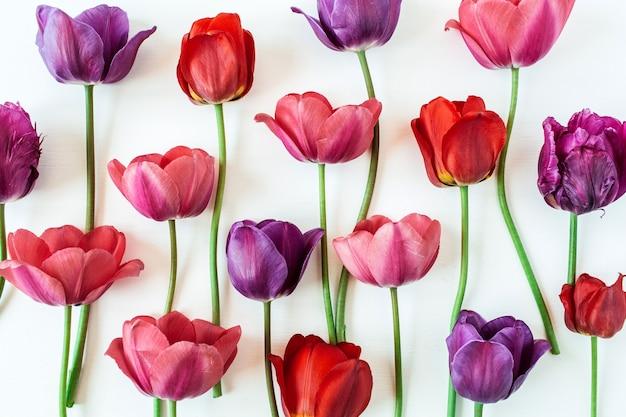 Kompozycja kwiatowa z kolorowych kwiatów tulipanów na białym tle