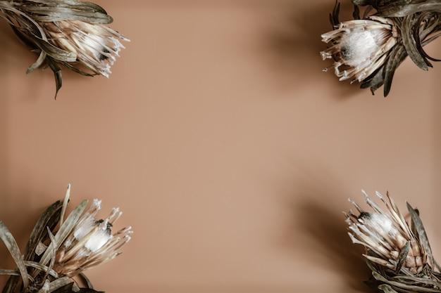 Kompozycja kwiatowa z naturalnymi kwiatami protea leżącymi płasko, widok z góry.